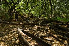 15-09-19 Ruta Okavango Botswana (150) R01 (Nikobo3) Tags: frica botswana delta deltadelokavango okavango parque naturaleza mokoro travel viajes nikon nikond800 nikon247028 nikobo josgarcacobo flickrtravelaward ngc unesco omot twop color culturas