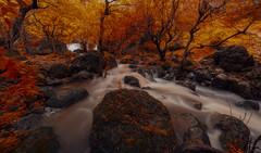 The Artist's Palette (Kamel Hamdi) Tags: longexposure autumn trees water forest river landscape waterfall foliage nikond810 afsnikkor1424mmf28