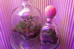 IMG_3180 (mobile_gnome) Tags: moss terrarium