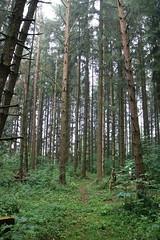 Holz (shortscale) Tags: wald fichte nadelwald nadelholz archery