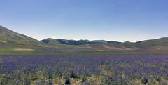 Castelluccio 2016 (M.a.r.t.Y) Tags: fioritura castelluccio flowers folwer fiori colori color paese borgo umbria italia natura estate