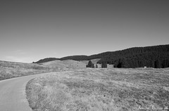 Fahren (LaKry*) Tags: mountain montagna bergen alberi bume trees nature natura altopianodellamarcesina asiago strada road strase grey grigio grau fahren viaggiare travel reisen