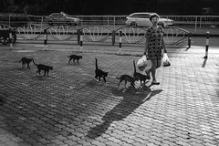 Cat Herder. (MichelleSimonJadaJana) Tags: bw black white monochrome sony ilce7rm2  a7rii a7r ii full frame thirdpartylens manual fullframe voigtlander vme adaptor fe mount lomography x zenit new jupiter 3 1550 l39m 50mm f15 lomo nex vsco documentary lifestyle snaps snapshot street photography china  shanghai