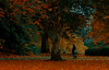 Mood (Steve-h) Tags: nature natur natura naturaleza park ststephensgreen dublin ireland europe autumn fall october 2015 woman lady girl walking trees leaves leaf pond paths railings shrubs evergreen sky digital exposure ef eos canon camera lens steveh posted september 2016 allrightsreserved