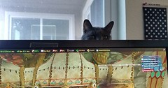 Keeping a close eye via http://ift.tt/29KELz0 (dozhub) Tags: cat kitty kitten cute funny aww adorable cats