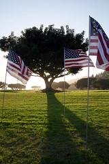 under sunset (wang_xiao) Tags:     california flag grass tree sunset