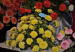 Lovely Rita 9 4 2016 (rbdal (Rick Dalrymple)) Tags: lovelyrita semperfi goodday cupcake bouquet swanislanddahliafestival swanislanddahlias dahlia dahlias dahliafestival flowers blooms canby clackamascounty oregon d7000 nikon newhybrids