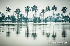 inde_1302163979.jpg (aurelien.mahot) Tags: kumarakom backwaters inde indien asiatique asie indedusud kerala