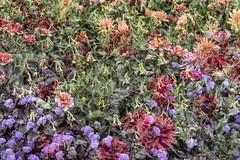 Flora Plenteous 66 (pni) Tags: flower multiexposure multipleexposure tripleexposure helsingfors finland suomi pekkanikrus skrubu pni musiikkitalo musikhuset musiccentre