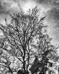 storm II (Birgit F) Tags: park norway lensbaby norge moss spring kristiansand vår selectivefocus mose vestagder ravnedalen edge80