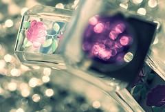 Top Notes (Tracey Rennie) Tags: pink macro glass perfume bokeh naturallight bling fromthetop tamron90 macromondays aquafiorentina