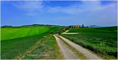 P1050629 (rayds2016 Photo) Tags: verde panasonic campagna siena orcia lx7