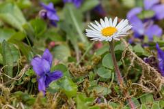 Frühling #1