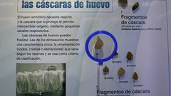 Cáscaras de huevo (vcastelo) Tags: madrid españa spain museo huevo minero instituto opi minerales investigación cáscara geológico igme