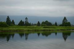 Alouette River (Ian Threlkeld) Tags: trees canada nature water reflections landscapes nikon bc britishcolumbia canadian explore rivers pacificnorthwest westcoast pnw irt naturephotography nikonphotos pittmeadows beautifulbc my canadianlandscapes nikonphotography nikonphoto nikonphotographers explorebc explorecanada