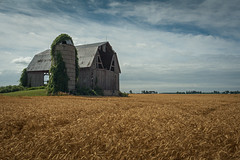 Amber Waves of Grain (james.cdevlin) Tags: abandoned barn landscape michigan farm grain abandon thumb huroncounty