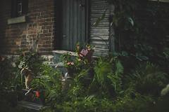 Wanderings (Captain Nots) Tags: cat garden outdoors outdoor landscaping quaint