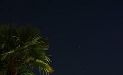 """""""Per quanto mi riguarda, nulla so con certezza. Ma la vista delle stelle mi fa sognare"""" - Vincent Van Gogh (norella.giorgia) Tags: sky plant night stars nikon cielo palma nocturne notte pianta stelle d5500"""