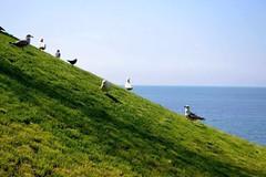Green & Blue & Life (ekinsubirincu) Tags: saegulls nature sea grass