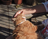 IMG_1463_A (from_the_sky) Tags: chapel dartmoor devon cats t513 mpt513 matchpoint matchpointwinner