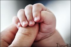 Petite main. (nanie49) Tags: famille familia family famiglia france francia bb baby nouveaun newborn reciennacido nanie49 nikon d750 portrait retrato