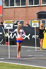BTCC Snetterton 2016 (Stono) Tags: turkington plato jackson touringcars snetterton norfolk neal shedden jordan goff collard honda subaru ford ingram tordoff bmw