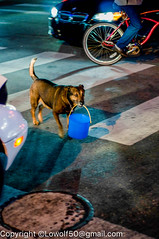 _DSC3735.jpg (orig_lowolf) Tags: d300s dog flickr florida miami nikon people sobe southbeach