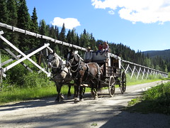 There's a coach coming! (diffuse) Tags: barkerville stagecoach horses flume dusty dirtroad approaching driver inside outside wheels 116