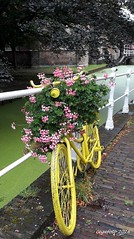 ...Life is a beautiful ride... (cegefoto) Tags: 116picturesin2016 bycicle yellow flowers delft thenetherlands canal