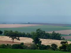 Culturas de inverno | Winter crops (IgorCamacho) Tags: trees nature paran field brasil rural landscape natureza paisagem southern crop plantation campo cornfields crops cultura sul rvores plantao