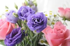 pink and purple roses 10/52 (auroradawn61) Tags: uk pink flowers roses england march nikon pretty purple pastel pale dorset week10 athome bouquet poole pinkroses 2015 52weeks explored hamworthy purpleroses 52weeksin2015project 52weeksin2015