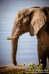 Elephant In Chobe National Park, Botswana