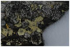 lav 3 (KvikneFoto) Tags: norge moss natur fungus mose lav hedmark kvikne