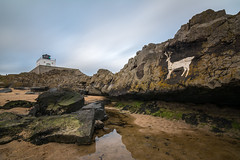 The Stag and the Lighthouse. (Callaghan69) Tags: uk longexposure england lighthouse seascape beach reflections painting landscape coast march seaside movement rocks shoreline rocky wideangle northumberland coastal filter le shore northsea slowshutter coastline northeast northeastengland northumberlandcoast northumbrian 10stop d7100 stagrock bamburghlighthouse tokina1116 10stopfilter harknessrocks blackrockspoint nikond7100 haida10stop