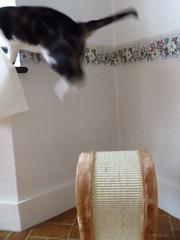 Crisis over! (Pat's_photos) Tags: cat scratchingpost