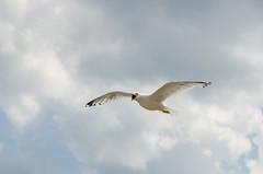 Angry Bird !!!! (thrumyglasseye) Tags: bird angry