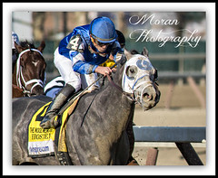Frosted wins the Wood Memorial (EASY GOER) Tags: horses horse ny newyork sports race canon track running racing aqueduct 5d athletes races thoroughbred equine thoroughbreds markiii equnie