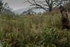 On the Edge! (kitwilliams91) Tags: uk cold ess canon woods horizon gloucestershire judging englishspringerspaniel workingtest 5dmarkiii bwwgds