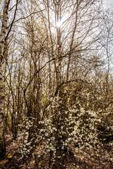 spring (sammys gallery) Tags: wiggisland
