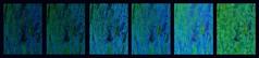 keine Lieblingsfarbe Blau Maigrn Detail Schiele Baum Ober St. Veit Fotobearbeitung Variationen eines Fotos - Blue Spring Green (hedbavny) Tags: vienna wien wood blue abstract color colour detail macro tree green art water collage austria design sketch sterreich spring wasser pattern kunst diary schiele sketchbook unterwegs artnouveau bark artdeco abstraction grn blau makro holz farbe weave tagebuch baum muster variation rinde weber tapestry teppich abstrakt frhling spaziergang jugendstil egonschiele rundgang findesiecle entwurf jahrhundertwende skizze hietzing sewingpattern schneiden schnitt abstraktion wandteppich weben skizzenbuch lieblingsfarbe maigrn schnittmuster oberstveit obersanktveit maigruen musterbogen teppichweber schnittmusterbogen hedbavny ingridhedbavny