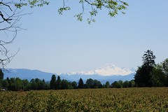 Mt. Baker USA (D70) Tags: from usa mountain canada field volcano mt baker bc taken blueberry valley lehman fraser