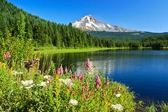 Trillium Lake & Mt Hood (JC Loves U) Tags: mountain lake oregon mthood hood wildflowers trilliumlake