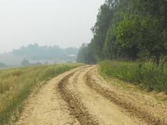 A Hazy  day from a few years ago. .. Landscape  Trees  Nature Naturaleza  Vista Countryside Russia Road     Haze Smog (Almena14) Tags: road trees naturaleza nature landscape countryside smog haze russia vista hazy