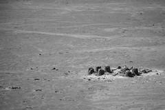 Chateau de sable 2 (icodac) Tags: mer canon noiretblanc sable nb plage portlanouvelle chateaudesable eos70d