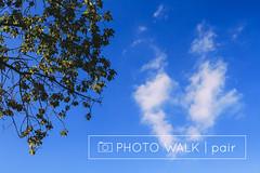 photo walk: pair (MissSabine) Tags: ifttt wordpress photo walk pair pairs photography