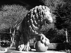 Stanley Park, Blackpool - 2016 (Rhisiart Hincks) Tags: lemhann   lwe lev cerflun statue sculpture eskultura kizelladur stanleypark blackpool sirgaerhirfryn fyldecoast lancashire lloegr powsows england sasana brosaoz ingalaterra angleterre inghilterra anglaterra  angletrra sasainn  anglie ngilandi fylde holidayresort cyrchfangwyliau duagwyn gwennhadu dubhagusgeal dubhagusbn zuribeltz czarnobiae blancinegre blancetnoir blancoynegro blackandwhite  bw feketefehr melnsunbalts juodairbalta negruialb siyahvebeyaz rnoinbelo    zwartenwit mustajavalkoinen crnoibelo ernabl schwarzundweis