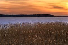 Last Light (Peter Vestin) Tags: nikondf tamronafsp9028divcusdmacro siruin3204x siruik30x adobecreativecloudphotography topazlabscompletecollection herrn skattkrr karlstad vrmland sweden vnern nature landscape seascape winter ice