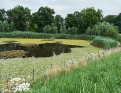 Waterplanten vijver - Water pond plants (desire van meulder) Tags: rumst antwerpen belgium pond vijver plants planten flowers bloemen