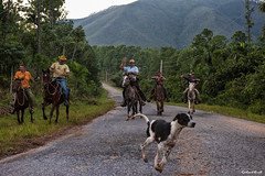 Gauchos ... (Gerhard Busch) Tags: anreise fotoreise kuba landschaft tal vinales