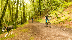 bikes and Zac (grahamrobb888) Tags: nikond800 sigma20mm zac dog pet bikes mountainbike woods forest perthshire scotland